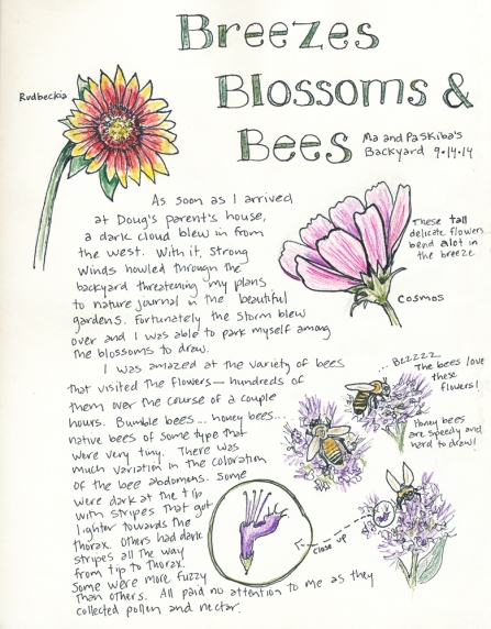 The results of some much needed rest and relaxation: a sketch sketch in my nature journal.